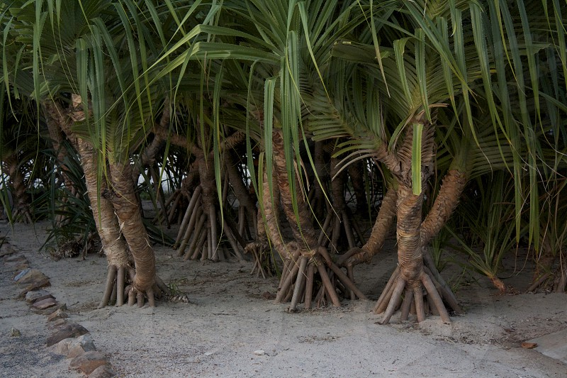 """When I think of the """"Power of Many"""" my mind always goes to Roots and these quirky palms capture just that. photo"""