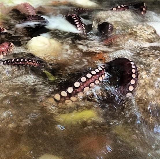 Octopus cooking boiling squid calamari photo