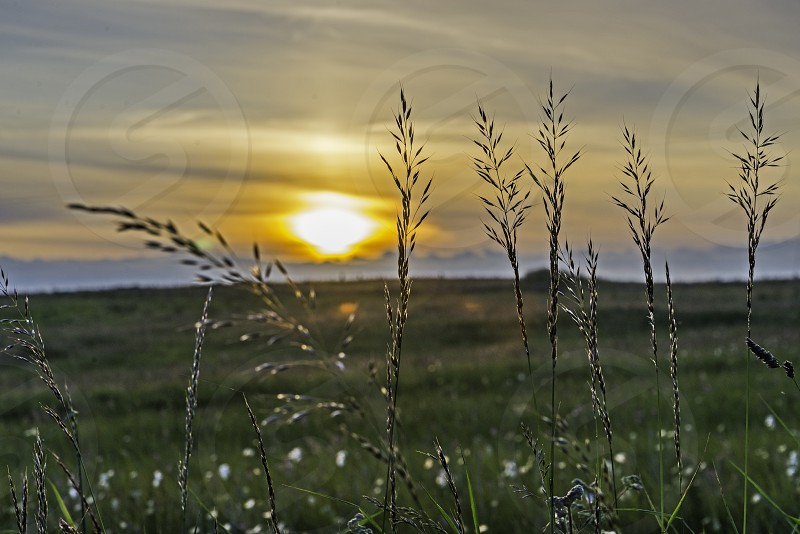 Meadow Grass with the sun setting behind. photo
