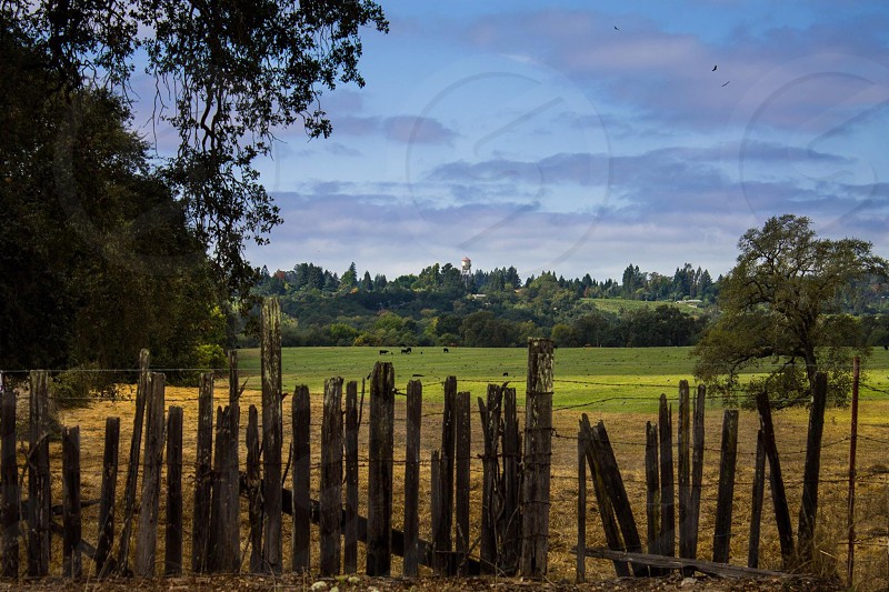 brown wooden post fences on brown grass near green trees photo