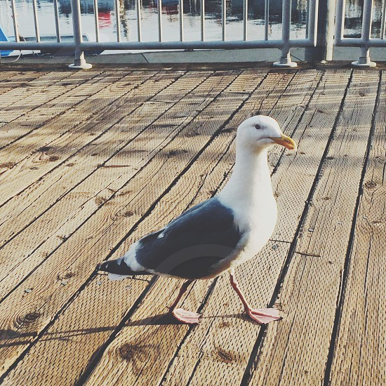 white and black seagull on brown wooden surface photo