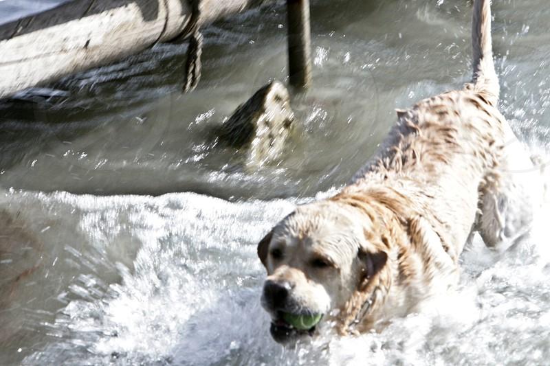Dog cane water acqua photo