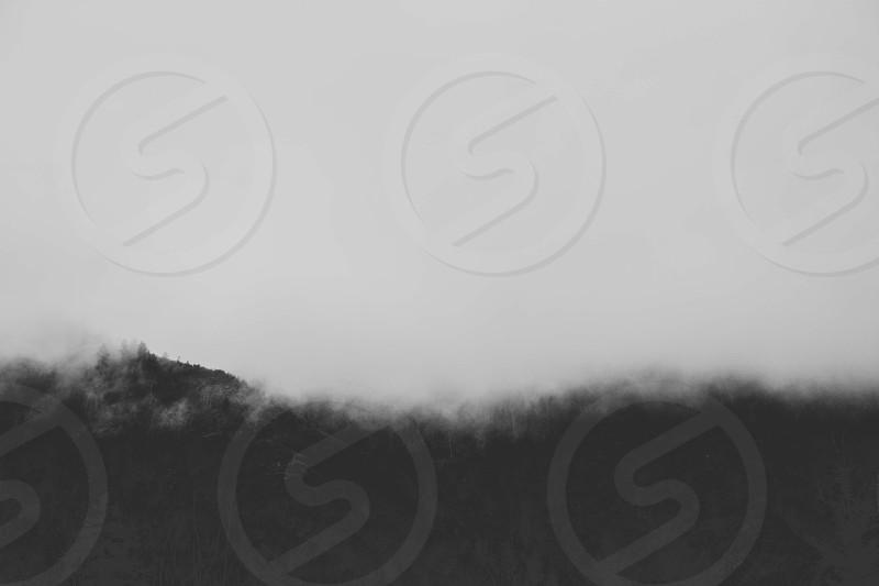 winter fog trees photo