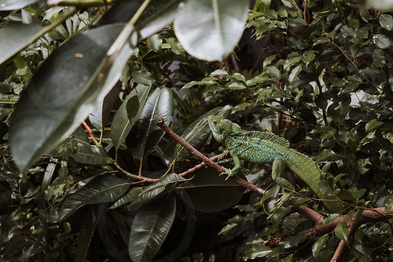 lizard on a branch in a very green image photo