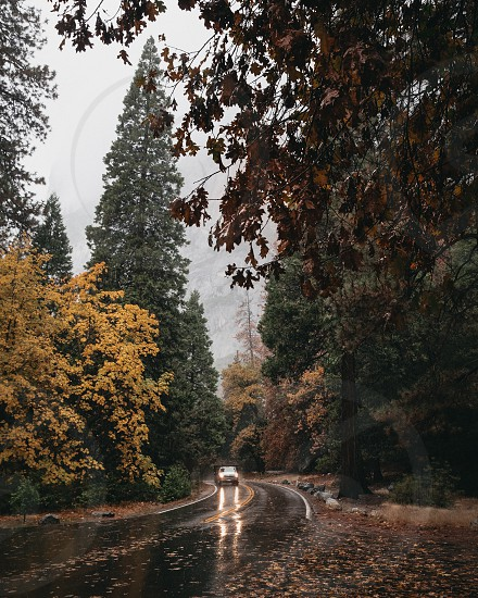 Fall colors in Yosemite National Park. Seasonal changes. Rainy conditions.  photo