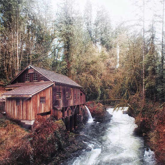 brown wooden plank house beside river surrounded by trees and plant during daytime photo