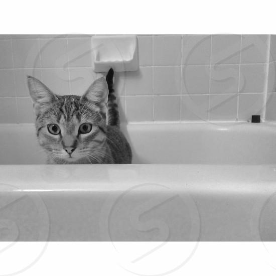 Pets • cats • kitten • family pet • bathtub • bath time • cute • cat • tabby • tiger cat • animals  photo