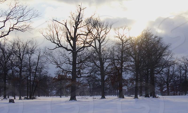 winter light sun trees woods snow shadows photo
