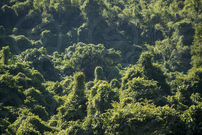 tropical forest in the Landscape at the Mekong River in the town of Luang Prabang in the north of Laos in Southeastasia. photo