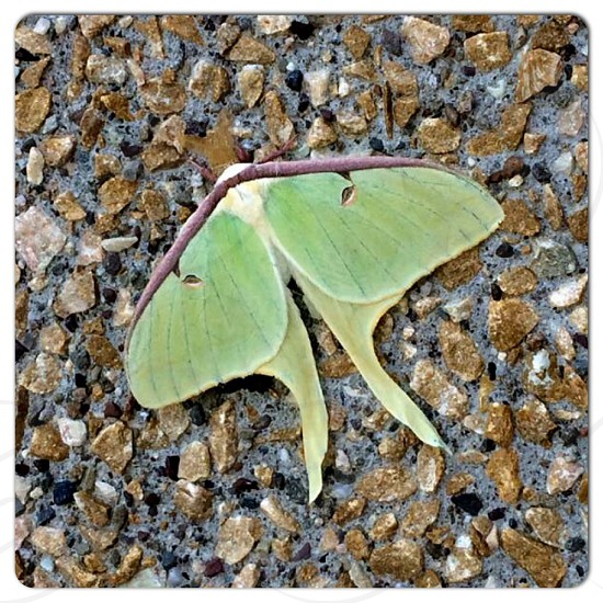 Beautiful moth getting some sun! photo