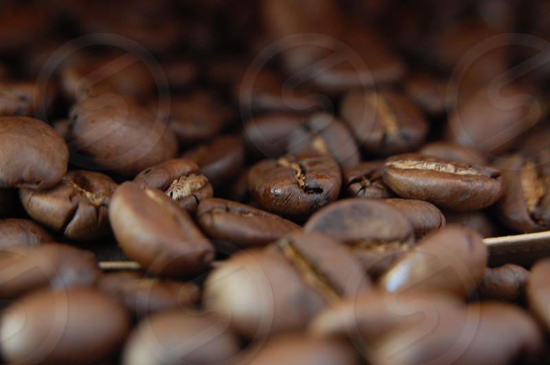 Coffee coffee beans beans roasted  photo