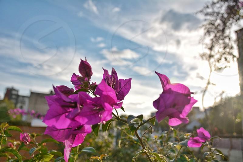 Color flowers sky photo