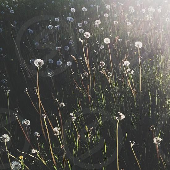 white flower plant on green grass photo