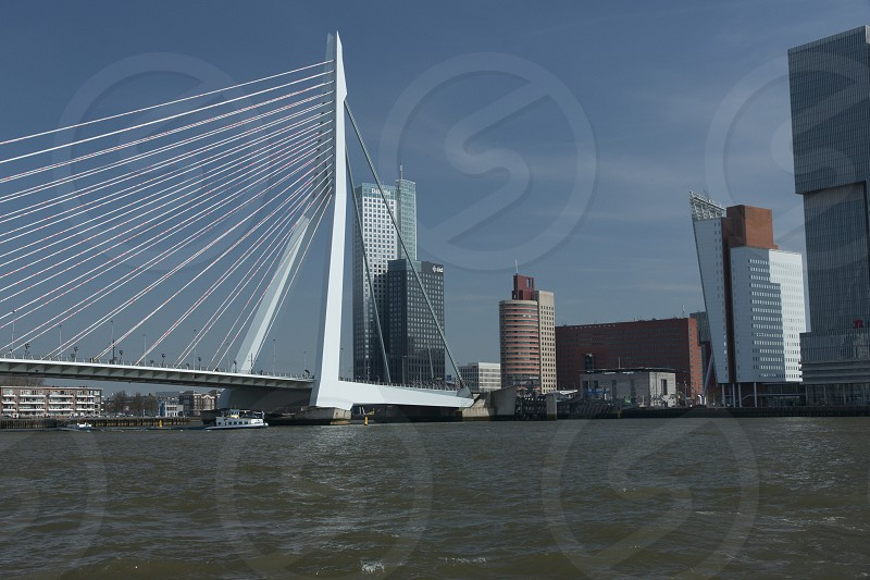 The Erasmusbrug towering over the river Maas in Rotterdam the Netherlands photo