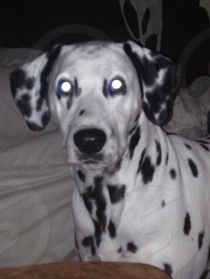My puppy  photo
