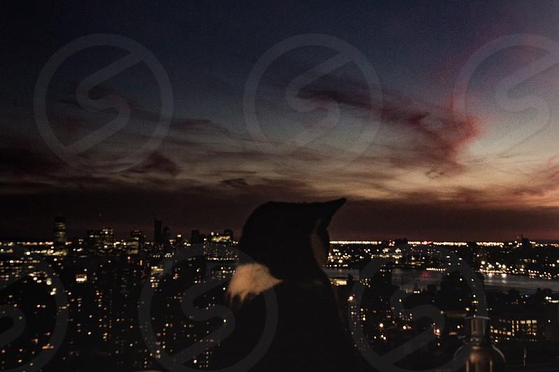 SunsetNew York  photo
