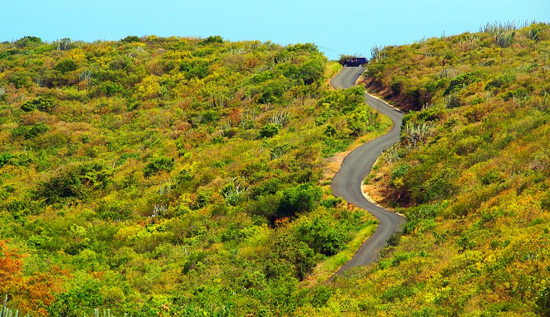 green trees and black asphalt road photo