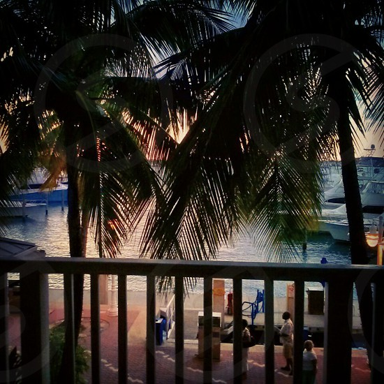 Silhouette of palm trees from balcony of a marina overlooking waterway photo