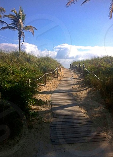 Miami coast beach Palm trees photo