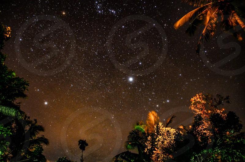 Stars galaxy trees night sky photo