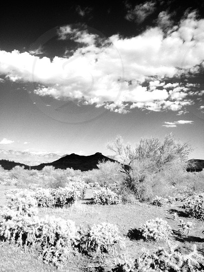 Sonoran desert chain fruit cholla garden with new river mountain in the distance. photo