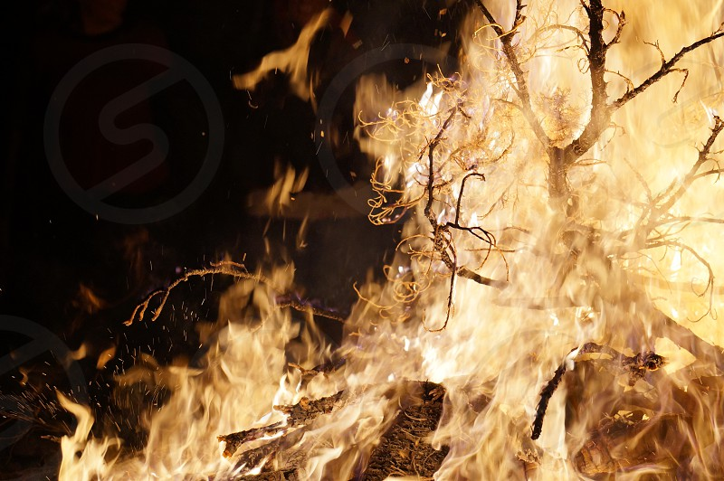 Bonfire fire burning tree photo