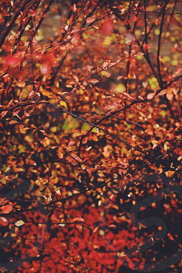 brown and red leaves photo