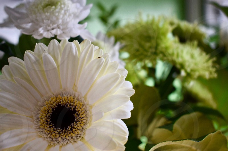 Flower; Daisy; Bouquet; Greenery; Beauty; Floral photo