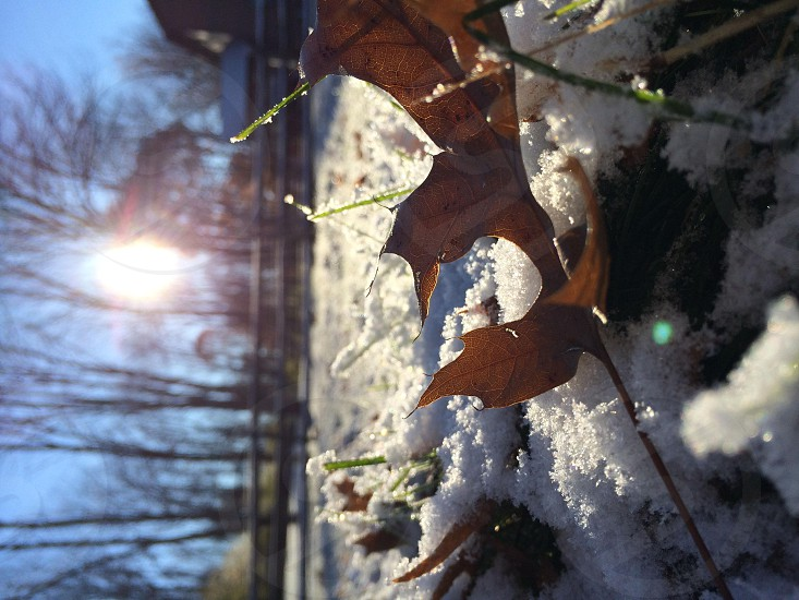 brown leaf in a snow  photo
