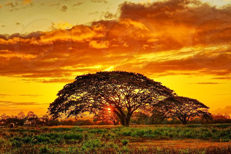 Sunset through the Trees. photo