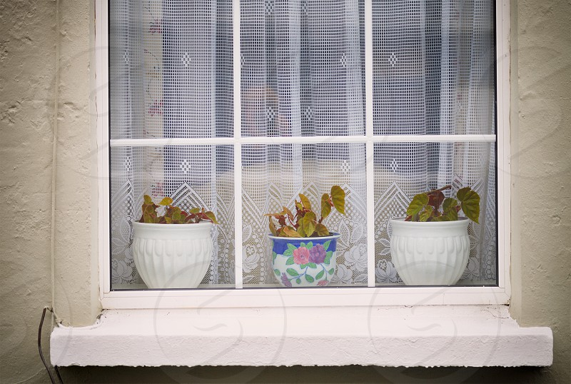 Vintage window with potted plants photo