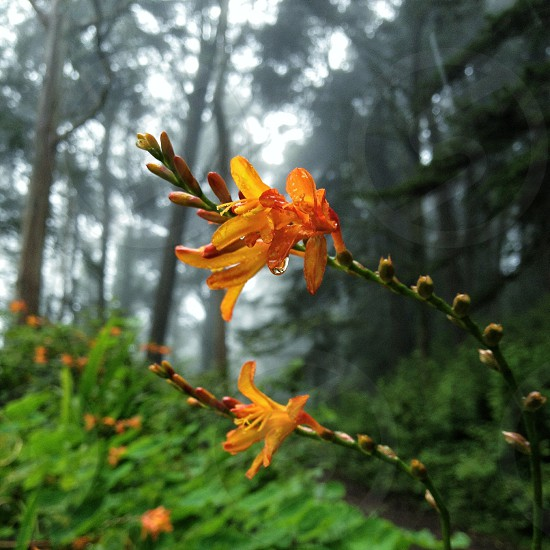 orange flowering plant photo