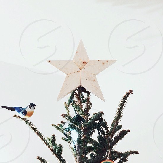 green christmas tree with white star photo
