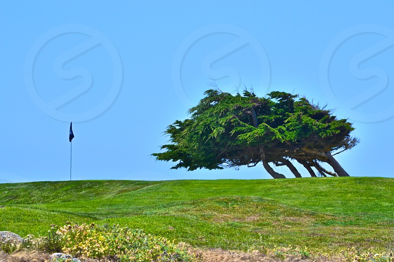 view of tall tree on grass field photo