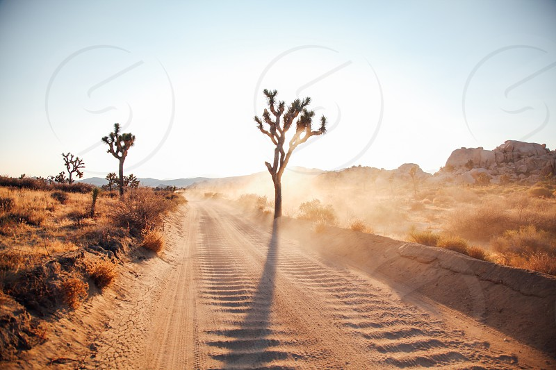 Joshua Tree California photo