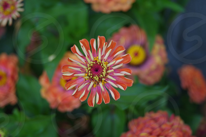 orange and pink flower in shallow focus photography photo
