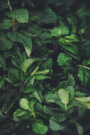 green oval leafed plant photo