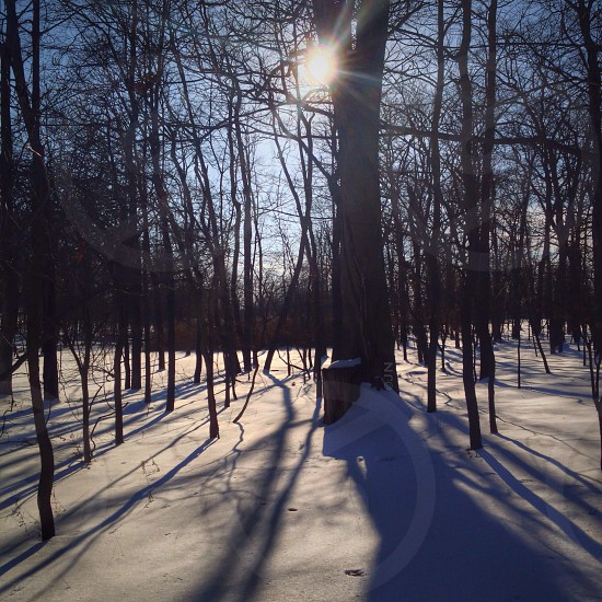 leafless tree and snow road view photo
