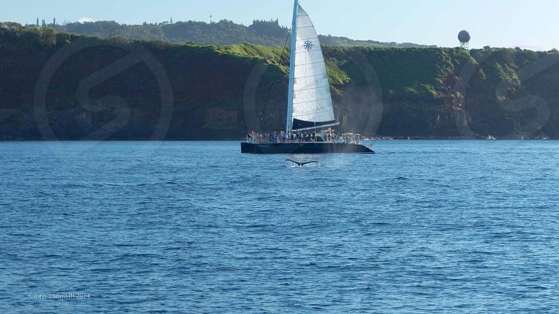 Kauai Humpback tantalizes the viewers. photo