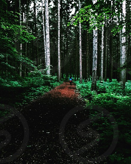 Nature depth forest greenery  photo