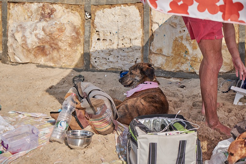 in the dog beach Tel Aviv 2018 photo