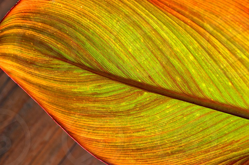 Leaf colorful pattern  photo