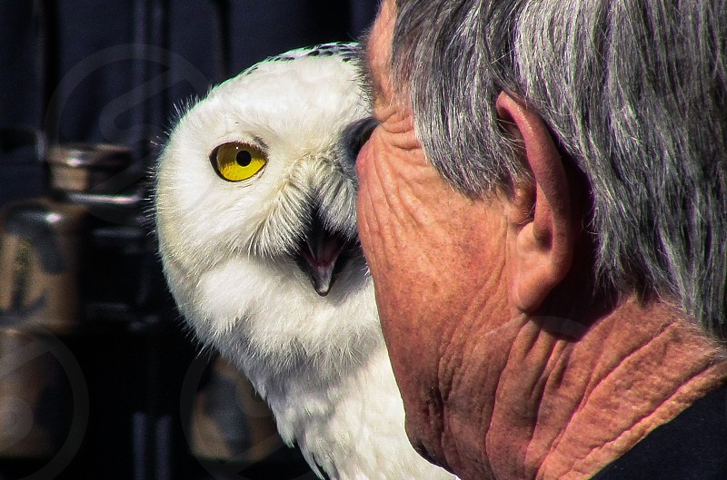 white owl in front of man wearing black shirt photo