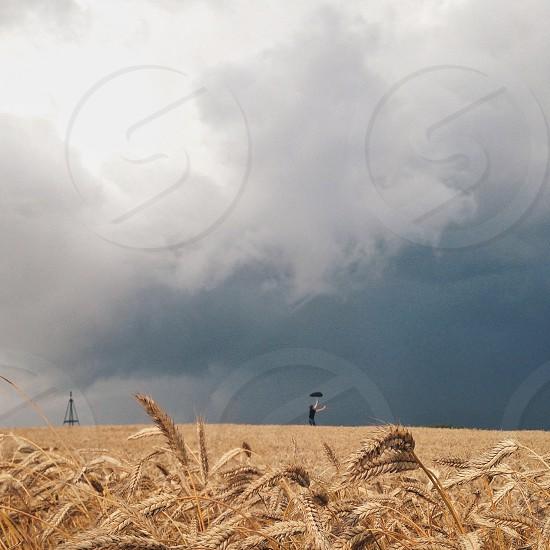 person holding black umbrella across brown wheat field under dark clouds photo