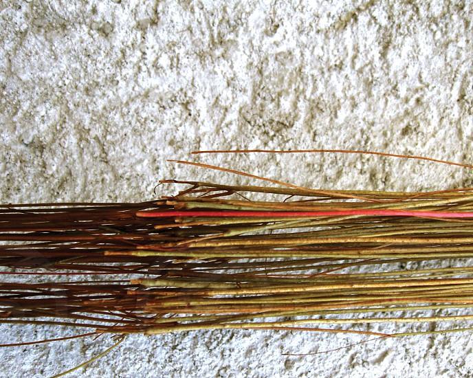 Vine crawls horizontally along the wall. photo