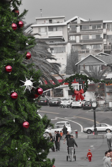 green christmas tree near street photo