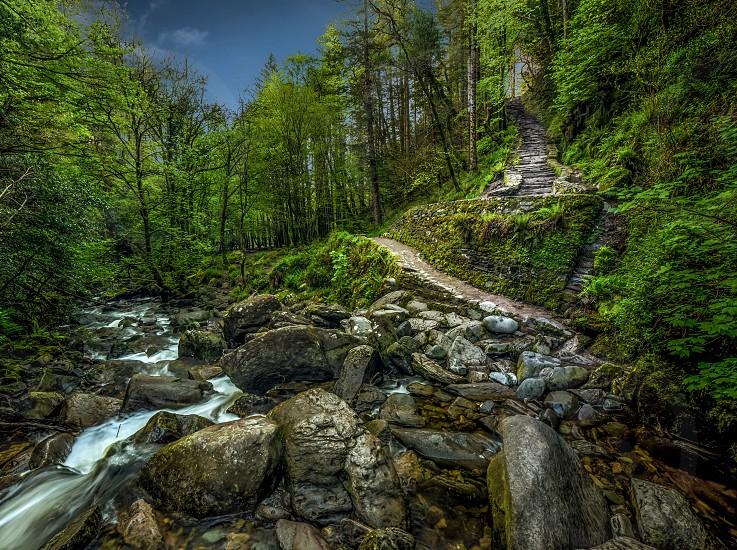 river between green trees photo