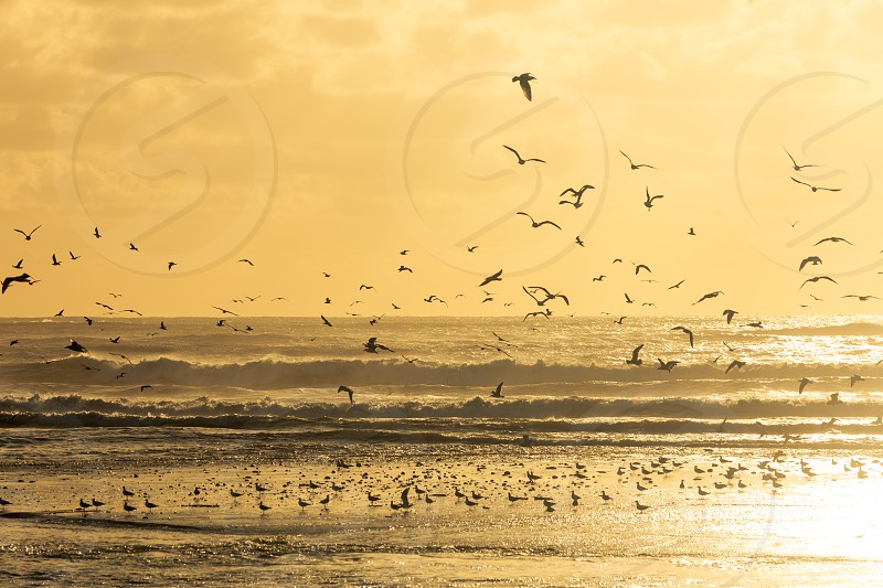 Seagulls taking to the air off a beach during sunset photo