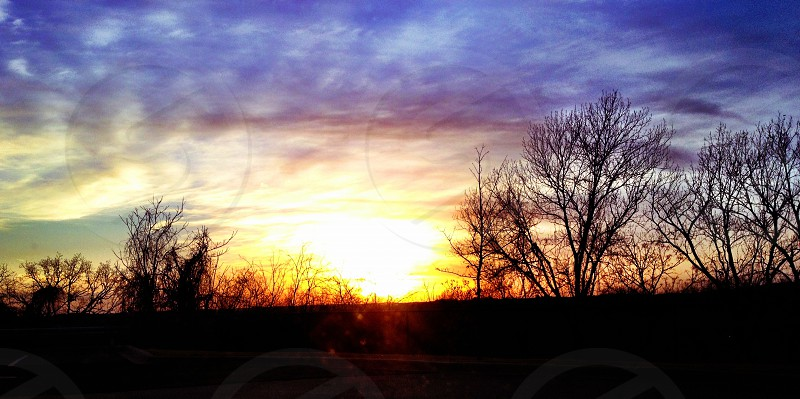 leafless tree with a blue sky on a sunrise view photo