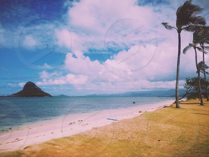 seashore with coconut trees view photo